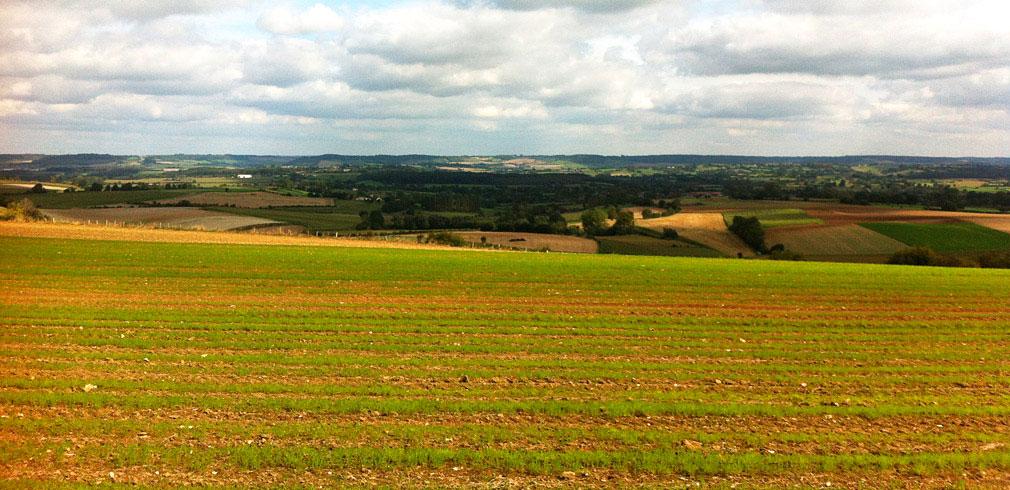 Paysage vert en Normandie